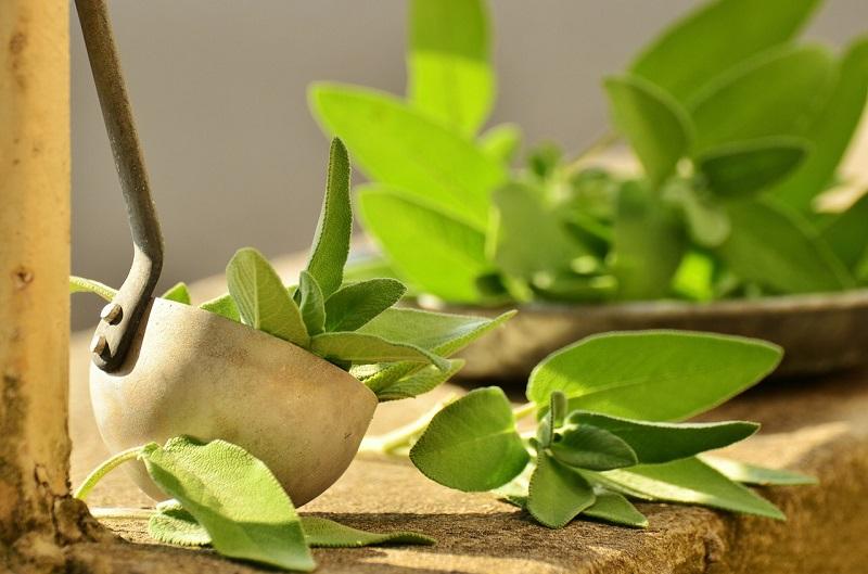 Z ziołowej apteczki – jakie zioła na niestrawność?