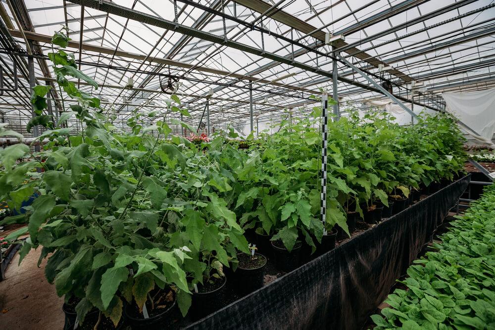 Uprawa w ziemi czy hydroponika – co będzie lepsze dla Twoich roślin?